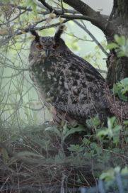 Natuurherstel Sint-Pietersberg wordt tastbaar met webcam