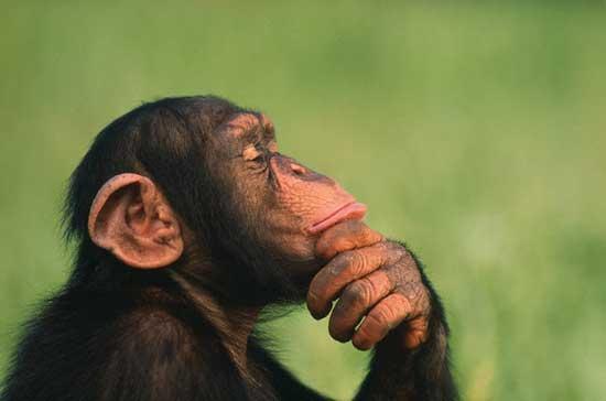 Topman is vaak 'goedbedoelende, maar agressieve, liegende en bedriegende primaat'