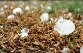 Boeren slepen Interpolis voor rechter om hagelschade