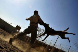 'Stel aansprakelijkheidspolis verplicht voor hondeneigenaren'