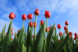 Weer nieuwe hypotheekaanbieder: Tulp Hypotheken