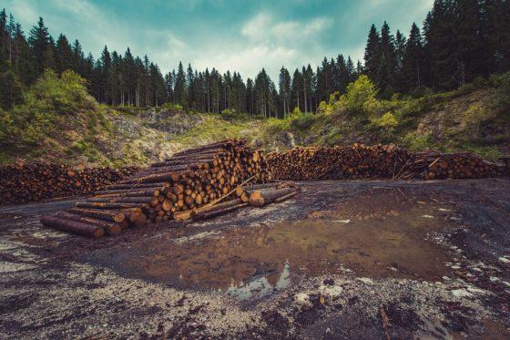 PvdD wil dat ministers ABP aansporen einde te maken investeringen palmolie-industrie