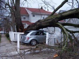 Verbond: 'Eerste raming stormschade komt uit op € 90 miljoen'