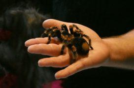 Nachtmerrie over spinnen: letselschade niet vergoed