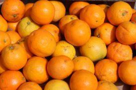 Wie draait op voor rot fruit in een zeecontainer?