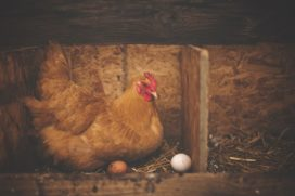'Nederland wil minder pensioen ten gunste van dierenwelzijn'
