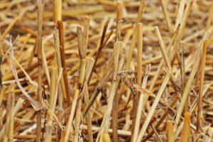 Extreme droogte bereikt punt waarop telers mogen claimen