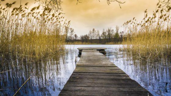 'Uitgedroogde dijk extra kwetsbaar bij regen'