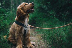Reaal verzekert 20 procent meer honden en katten