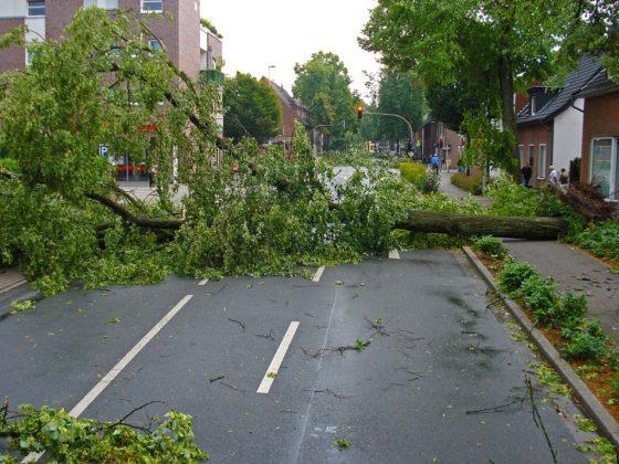 Deskundige beoordeelde boom die auto verpletterde eerder als veilig