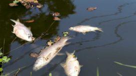 Milieuschade rivier de Geul: 'Dit kan elke organisatie overkomen.'