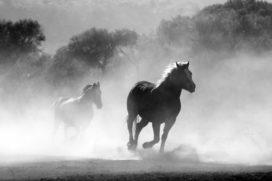 Wie is aansprakelijk voor een op hol geslagen paard?