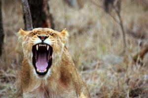 Pitchtraining op de am:dag: 'Wees niet de leeuw in de kamer'
