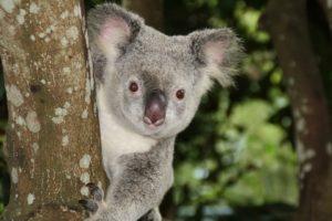 Flexfront verkocht aan Australiërs, gaat zich nu ook richten op hypotheekadministratie