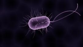 Kifid: Bacterie is geen geweld van buitenaf