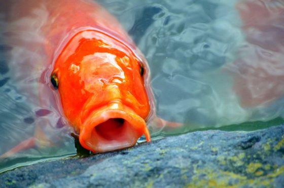 Kifid: Lekkende zwemvijver is meer vijver dan zwembad