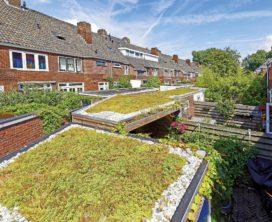 Interpolis wil met groene daken sterke stijging neerslagschades halt toe roepen