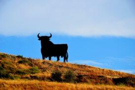 'NN bereidt bod voor op Spaanse verzekeraar Caser'