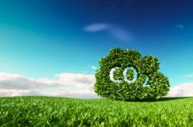 Dela gaat voor klimaatneutrale uitvaart